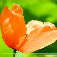W Kolorze Pomarańcz
