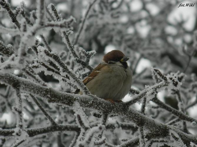 Coś dla wielbicieli zimowych widoków....