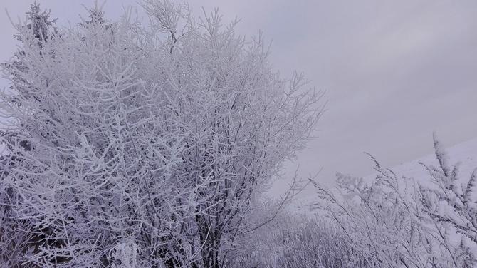 Malownicze oblicze zimy