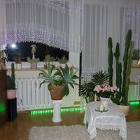 agawy i kaktusy