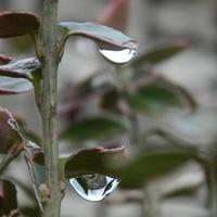 Deszczowa środa....