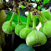 Egzotycze owoce