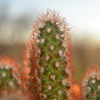 kaktusik :)