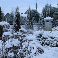 Pod śniegową pierzynką...