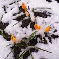 Wiosna . . . . . . . .