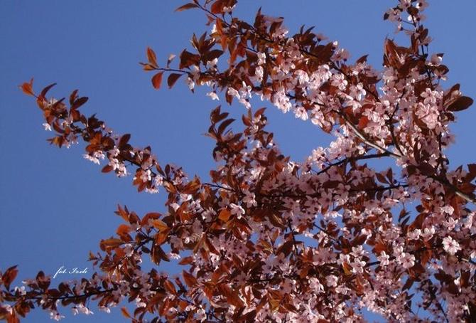 Czekamy na piękną wiosnę