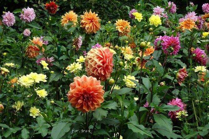 Kwiaty dla Wszystkich...