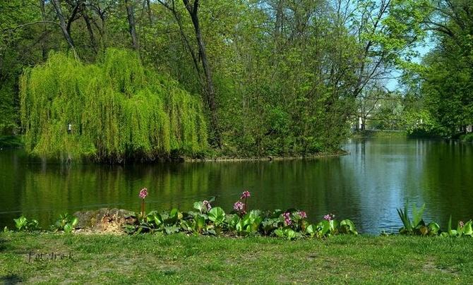 Kwiaty wiosną nad stawem