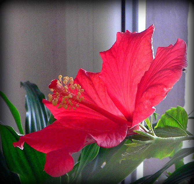 Niespodziewany kwiat