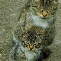 aaa - koty dwa ..............