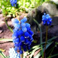 Błękitów Wam życzę kochani :)