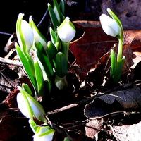 Dzika wiosna