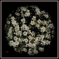 Kula z kwiatami
