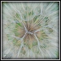 kwiatek, zdjęcie makro
