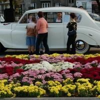 Kwiaty i samochód