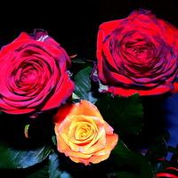 Niech Walentynki trwają cały rok :)