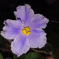 Pojedyncze kwiatuszki...
