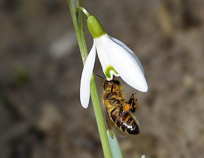 głodna pszczółka ..........