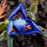 Błękitów Wam życzę :)