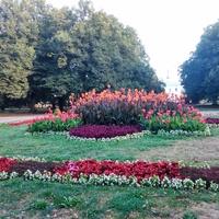 Grządka w zamojskim parku ;)