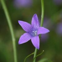 Jeden kwiat, a daje dużo emocji ;)