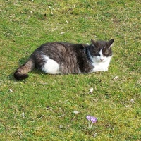Kotka działkowa Lala , ma 14 lat.