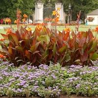 Kwiaty w Kozłówce na tle bramy