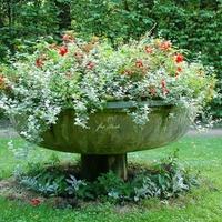 Kwiaty w parku w Nieborowie