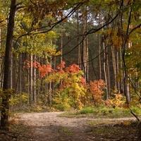 Tajemniczy las jesienny