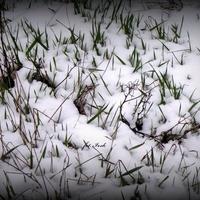 Trawa w ogrodzie 15 marca br.