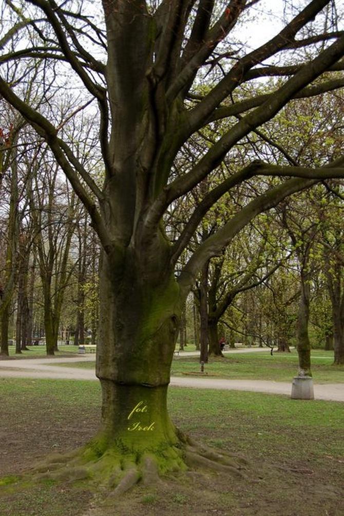 Dziwnie ubrane drzewo od dołu