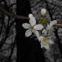 Biało, ale wiosennie...