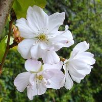 Biel wiosenna, temp. już raczej nie:)