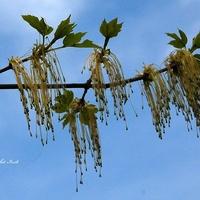Frędzle na gałęzi