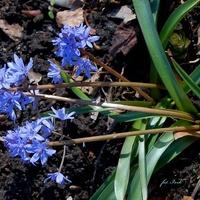 Kwiatek nieznany