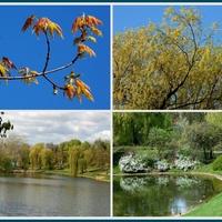 Kwitną drzewa w parkach