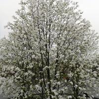 Wiosna- kwitną  magnolie