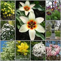Wiosna w Ogrodzie Botanicznym