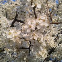 Wiosna w pełnej krasie...