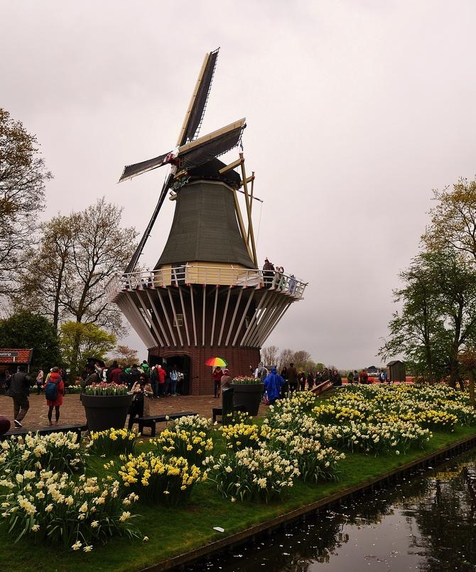 Holenderskie migawki...ogrodów