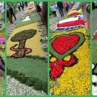 Dywany kwiatowe :)