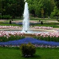 Klomb z tulipanami i fontanną.