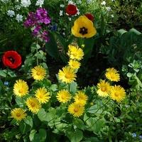 Kwiatki na moim osiedlu