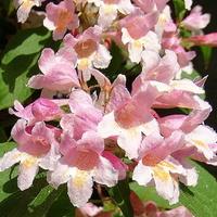 Kwiatków starczy dla wszystkich:)