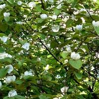 Kwitnące drzewo w ogrodzie botan.