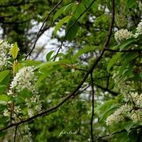 Ładnie kwitnące drzewo