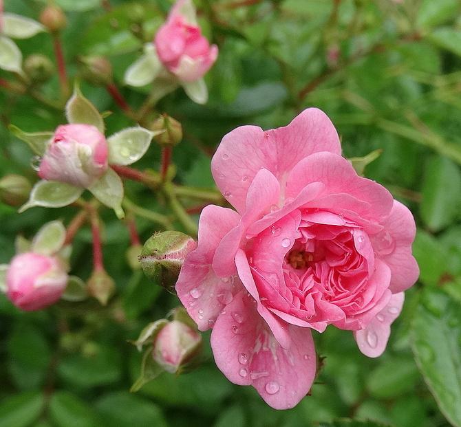 Maleństwa na różowe sny:)