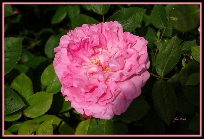 Różowych snów życzę.