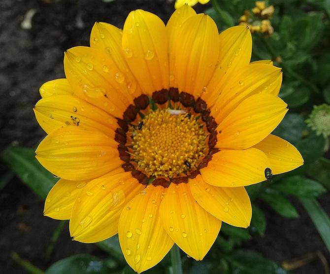 Słoneczka Wam życzę:)