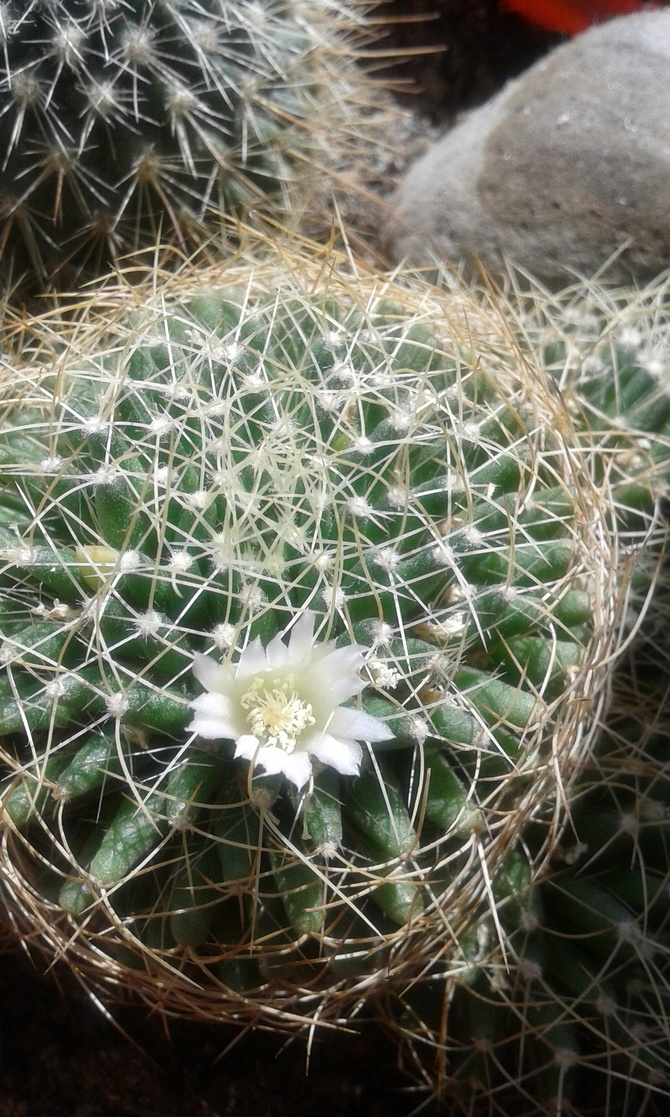 Tylko jeden kwiatek .....ale jest :)